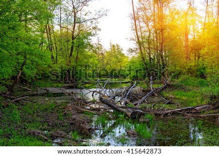 Old dead tree in forest swamp - stock photo