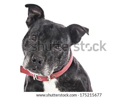 Old Dog on white background - stock photo