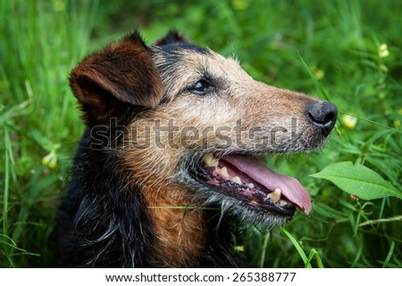 old dog outdoors - stock photo
