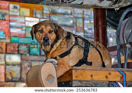 old dog with black harness on a wooden box in junk store - stock photo