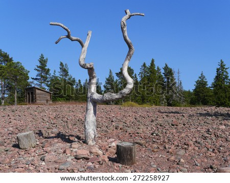 old dried out tree - stock photo