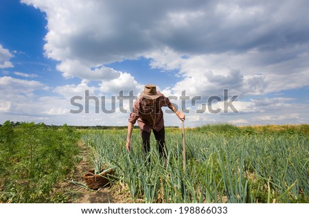 Old farmer working in an onion field  - stock photo