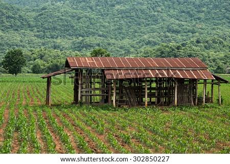 Old farmhouse near the mountain  - stock photo