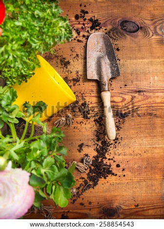 Old gardening scoop on wooden background with soil, flowerpot and plant, top view - stock photo