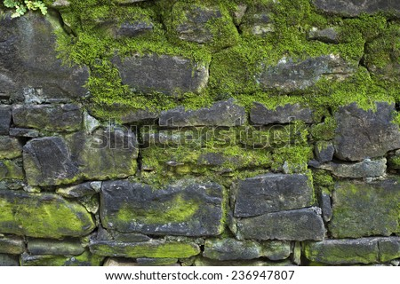 Old gray stone wall with green moss texture background close up - stock photo