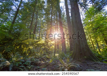 Old Growth Rainforest, Cathedral Grove, Vancouver Island - stock photo