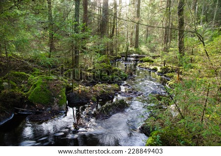 Old-growth untouched coniferous  forest with a fresh and clean streaming creek - stock photo