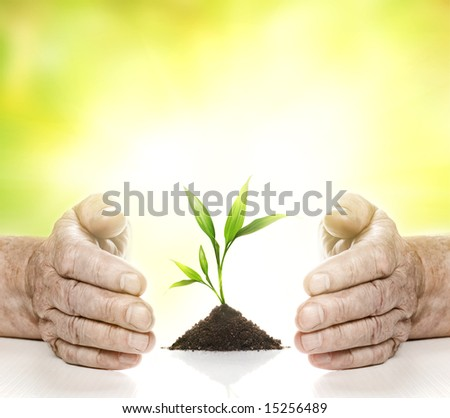 Old hands and young plant between them - stock photo