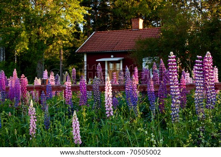 Old idyllic swedish cottage with flower in the foreground. - stock photo