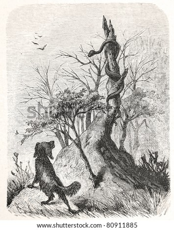 """Old illustration depicting a dog encounters a cobra in South Africa, drawn by Karl Liebscher in Emil Holub's """"Seven Years in South Africa"""", published in Vienna, 1881 - stock photo"""