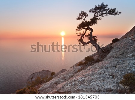 old juniper tree and sunset over the sea - stock photo
