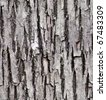old lime tree bark seamless background pattern - stock photo