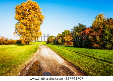 Old linden tree with gold leaves, walking path and lawn.  Autumn landscape - stock photo