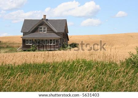 old log farmhouse in wheat field - stock photo