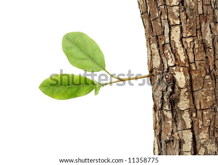 "old log with new shoot and fresh green leaves, ""new life""-concept - stock photo"