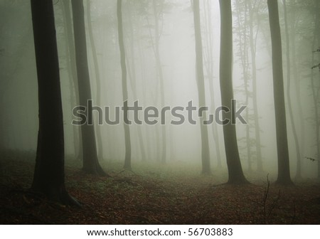 old looking photo of a forest after rain - stock photo