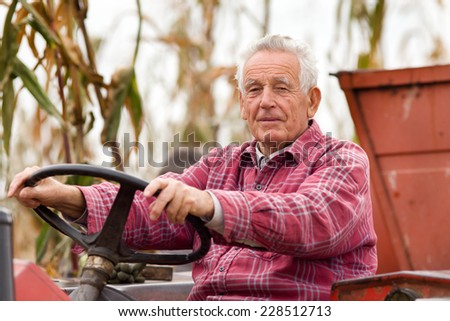 Old man driving tractor on corn field during harvest - stock photo