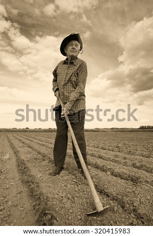 Old man hoeing in the sugar beet field in spring. Sepia image technique - stock photo