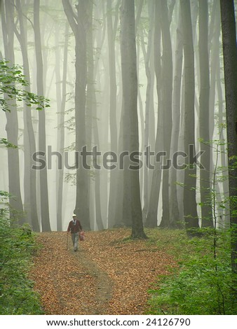 Old man walking in the beech forest. - stock photo