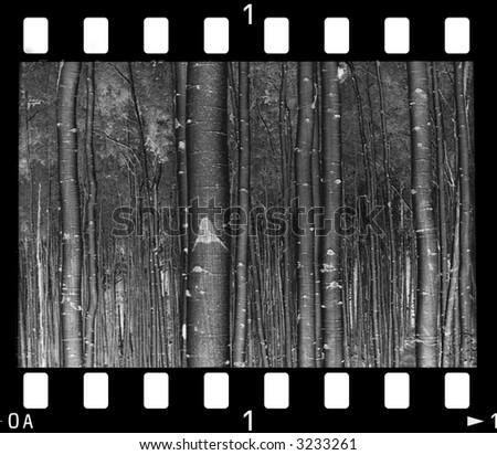 old monochrome negative (my work ) - stock photo