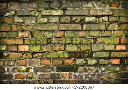 Old mossy wall in the jungle - stock photo
