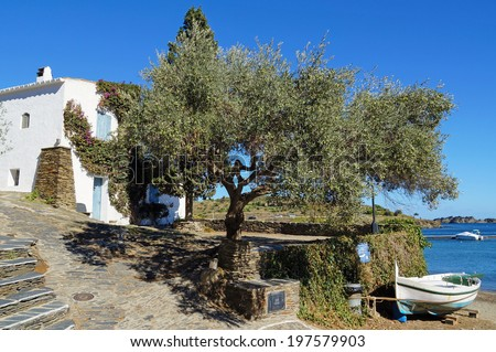 Old olive tree in a Mediterranean village on the sea coast, Cadaques, Costa Brava, Catalonia, Spain - stock photo