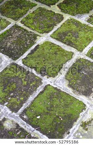Old pavement by a bush fence - stock photo