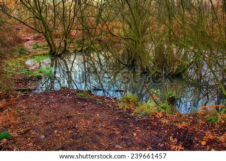 Old pond in the forrest  - stock photo