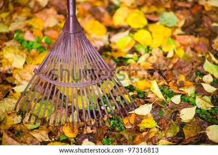 Old rake and maple leafs on the ground, horizon shot. - stock photo