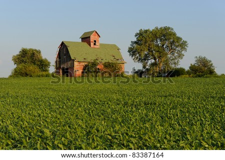 Old red barn and field of soybeans in rural Illinois - stock photo