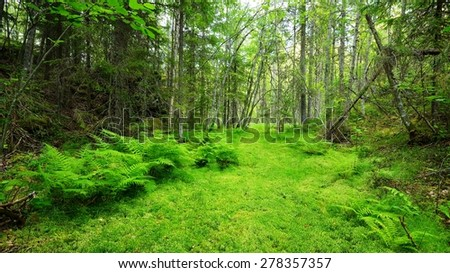 Old river bed in Finland - stock photo