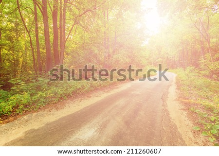 Old road in forest illuminated by the sunbeams in russian countryside - stock photo