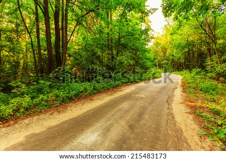 Old road in forest in russian countryside - stock photo