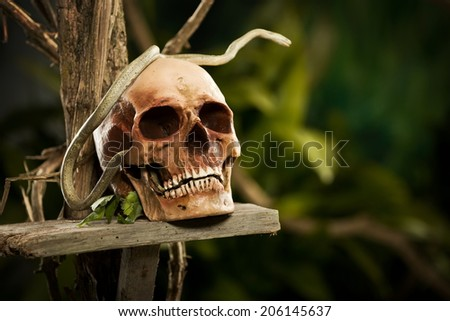 Old ruined skull with snake and wild jungle in the background. - stock photo