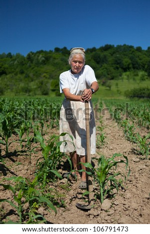 Old rural woman tiller weeding in the corn field - stock photo