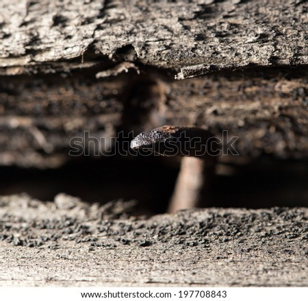 old rusty nail in the piece of wood. macro - stock photo