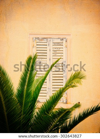 old shutters closed and palm tree - stock photo