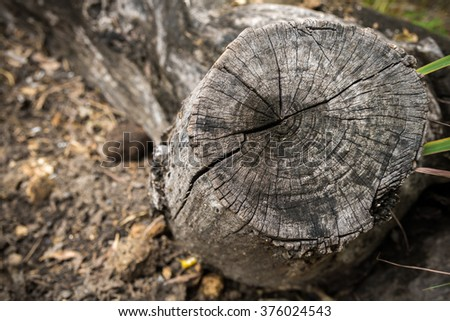Old stump and crack texture background. - stock photo