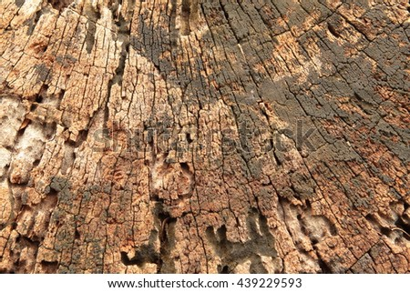 Old stump cross section texture, background shows weathered tree rings, the circle line in wood grain - stock photo