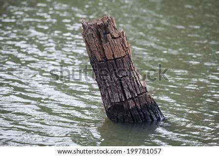 old stump in river - stock photo