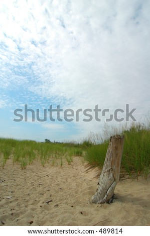 Old Stump on the Beach - stock photo