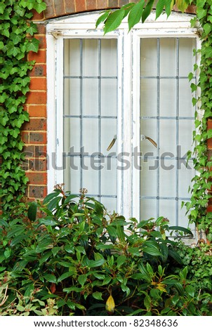 Old style window with ivy - stock photo