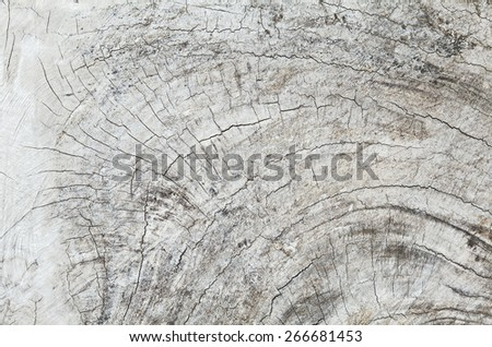 Old teak wood stump with cracks and annual rings, indonesian timber and furniture industry - stock photo