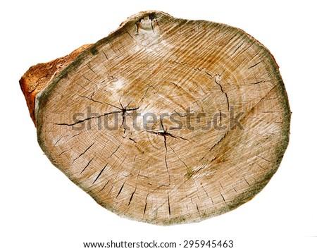 Old texture tree - stock photo