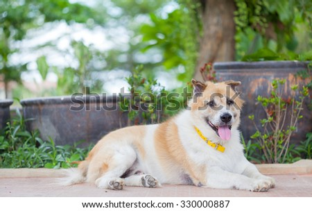 old Thai dog sitting with soft garden background - stock photo