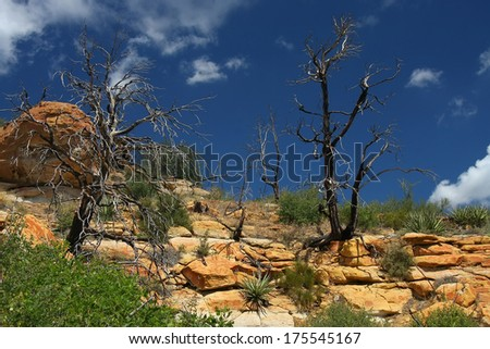 Old tree and rocks - stock photo