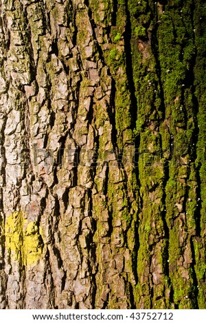 Old tree bark - stock photo