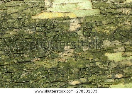 Old tree bark texture closeup - stock photo