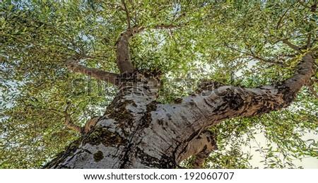 old tree close up - stock photo