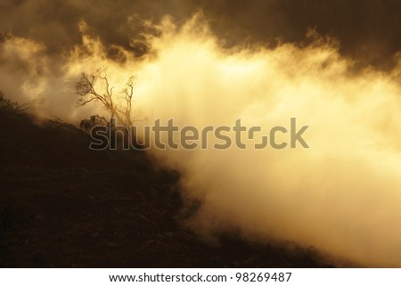 Old tree in the fog with sunset - stock photo